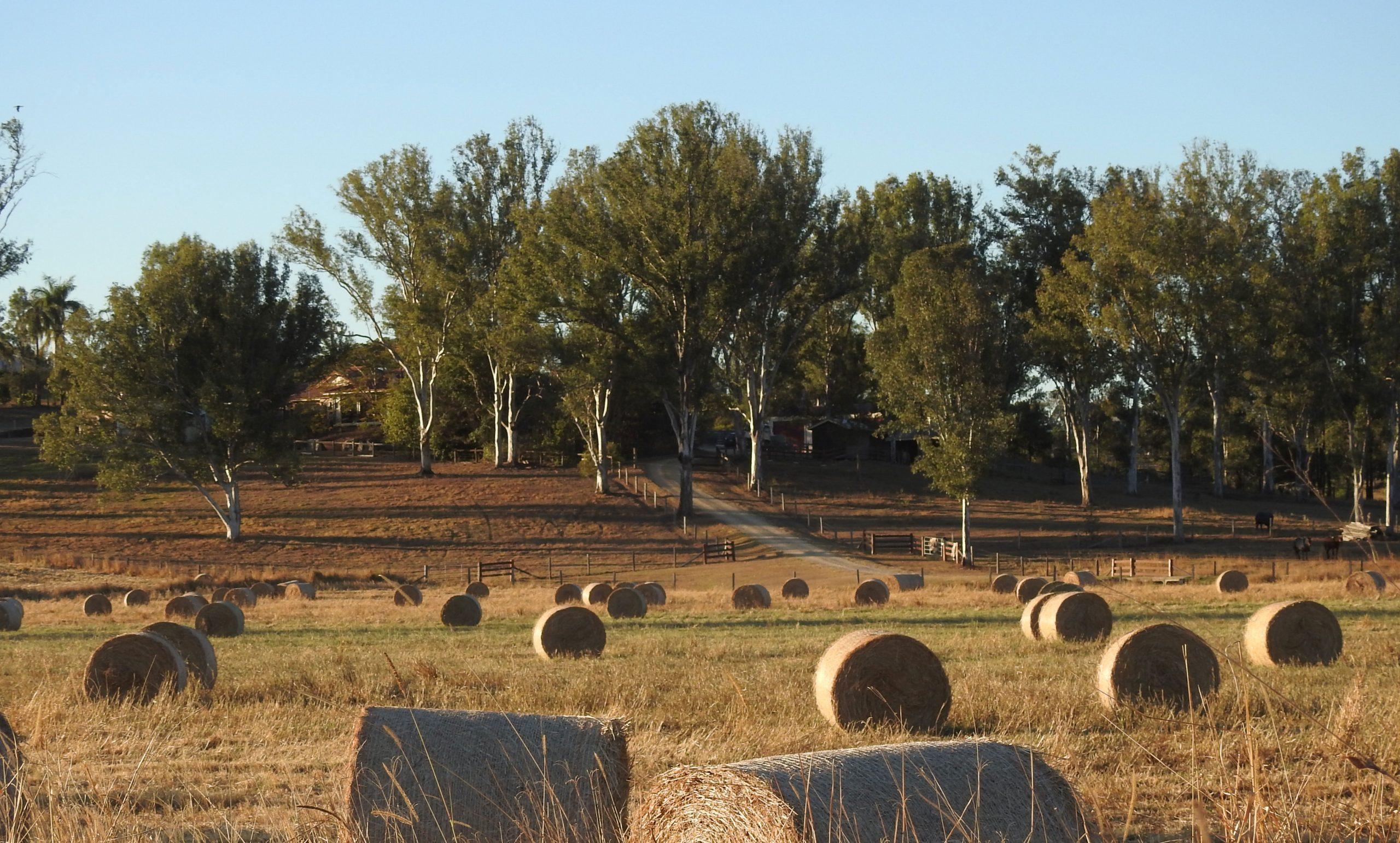 Property and Paddock Benchmarking